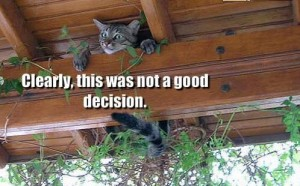 Cat Bad Decision